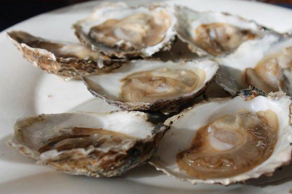 ガリシアの牡蠣