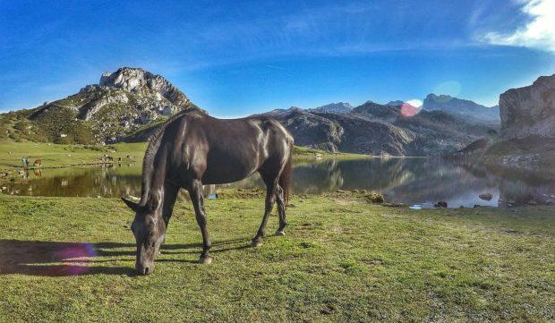 アストゥリアス コバドンガの湖