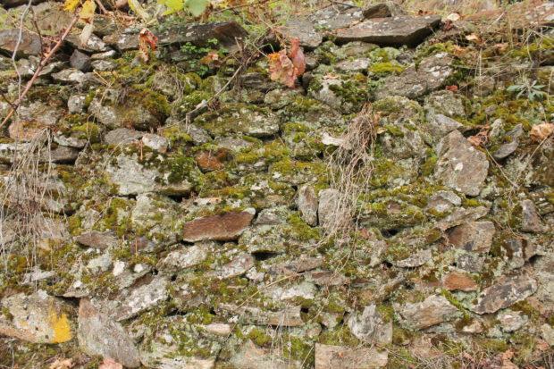 リベイラ・サクラの土壌
