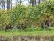 リベイロ 畑