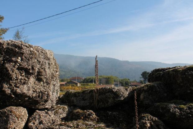 リベイロ 風景
