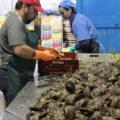 牡蠣 スペイン語
